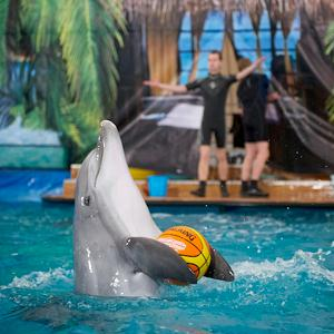 Дельфинарии, океанариумы Абрамцево