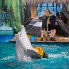 Дельфинарии, океанариумы в Абрамцево