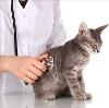 Ветеринарные клиники в Абрамцево